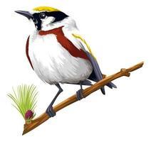 detaljerad fågel som sätter sig på gren