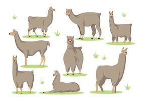 Gratis Llama Cartoon Vector