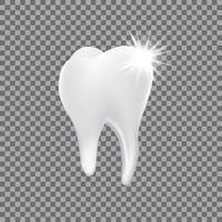 realistischer 3d Zahn isoliert vektor