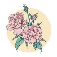 Pfingstrosenblüten mit Blättern vektor