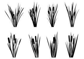 Set von Reeds Silhouetten vektor