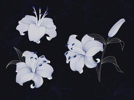 lyxig lilja blommig