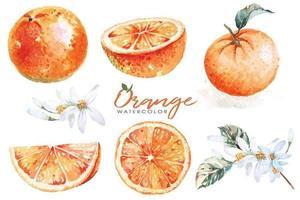 uppsättning apelsiner målade med akvareller vektor