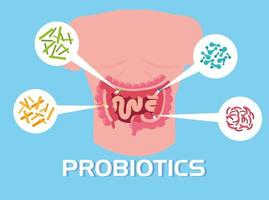 kroppsdel med probiotiska organismer vektor