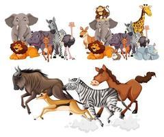 vilda djur grupper i tecknad stil vektor