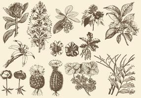 Sepia Exotische Blumenillustrationen