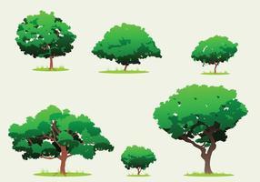 Mango träd fri vektor