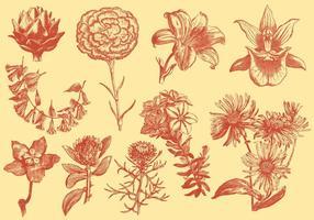 Orange Exotische Blumen-Illustrationen