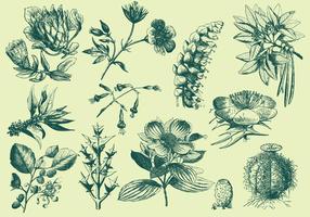 Gröna Exotiska Blomstillustrationer vektor