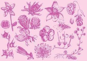 Rosa exotische Blumen-Illustrationen vektor