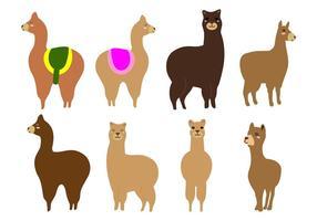 Freie Alpaka oder Lama-Vektor