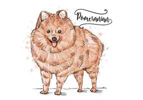 Free Pomeranian Hintergrund
