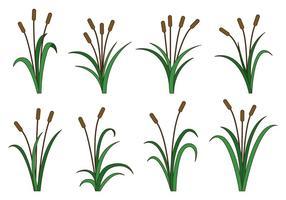 Set von Cattails Vektor