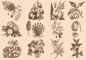 Brun frukt och blommillustration