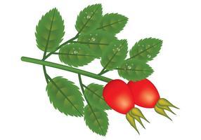 Hagebutten-Vektor-Pflanze