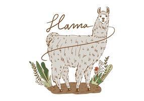 Freier Lama-Hintergrund vektor