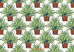Maguey Muster