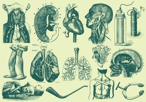 Grüne Anatomie und Gesundheitspflege Illustrationen