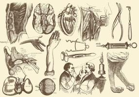 Sepia Anatomie und Gesundheitswesen Illustrationen