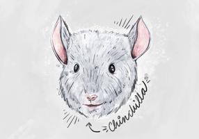 Free Chinchilla Hintergrund vektor