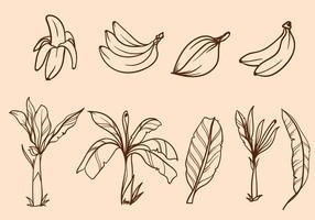Freie Hand gezeichneten Bananenbaum Vektor