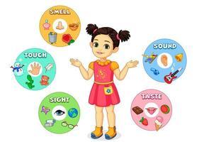 kleines Mädchen zeigt fünf Sinne Diagramm vektor