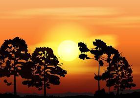 Silhouette Of Araucaria På Eftermiddagen vektor