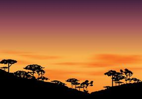 Silhouette von Araucaria am Nachmittag mit Sonnenuntergang Himmel vektor