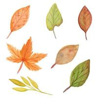 Sammlung von Herbstaquarellblättern