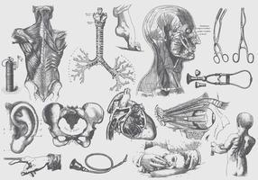 Graue Anatomie und Gesundheitspflege Illustrationen