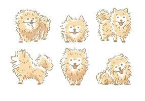 Pomeranian vektor