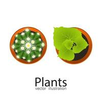 krukväxter ovanifrån