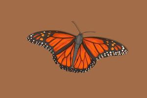 realistische Handzeichnung des Schmetterlingsorangenschmetterlings