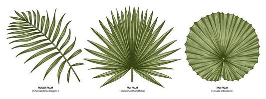 Vintage Palmblätter gesetzt vektor