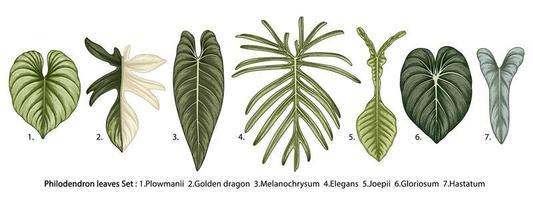 Vintage Philodendron Blätter gesetzt vektor