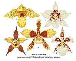 handgezeichnete Orchideenblumen gesetzt vektor