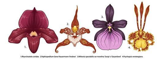 sehr detailliertes handgezeichnetes Orchideenset vektor
