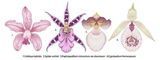 Orchideenblumen-Zeichnungssatz vektor