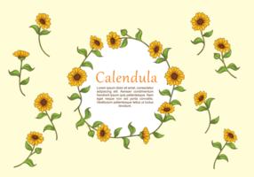 Calendula växtvektor vektor