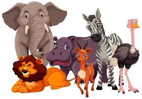 grupp vilda djur vektor