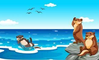 Seeotter, der im Ozean lebt vektor