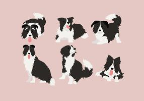 Border collie 2 vector