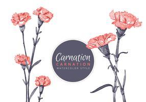 Free Carnation Blumen Hintergrund vektor