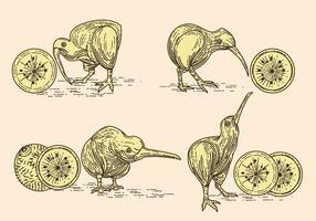 Vector Bild von Nizza Kiwi Vögel und Kiwi Früchte