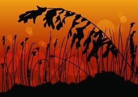 Sea Hafer Sonnenuntergang Blick