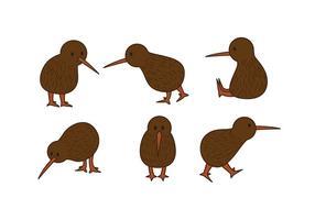Kiwi fågel vektor uppsättning