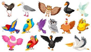 uppsättning av olika fåglar tecknad stil isolerad