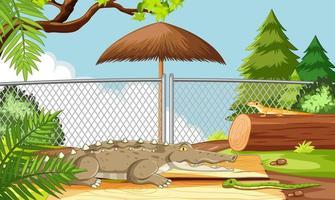 alligator i djurparken vektor