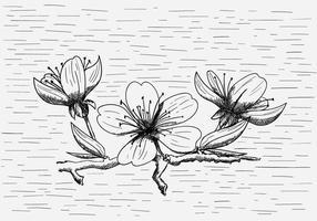 Gratis vektor persikablomma illustration