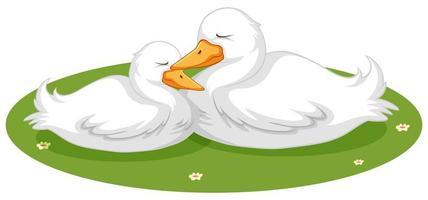 süße Enten schlafen im Gras